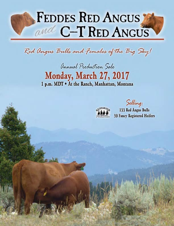 Feddes Red Angus Big Sky Elite Red Angus Sale